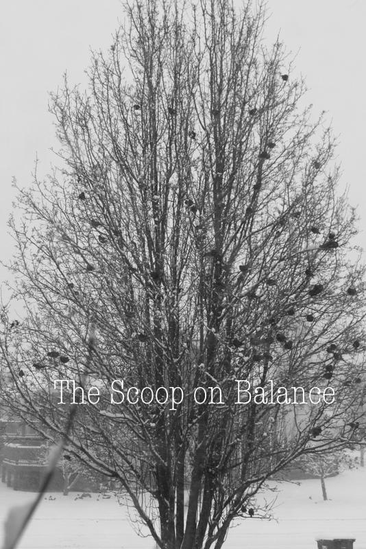 Winter Tree with Birds